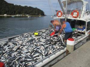 Seacoast Fishing Trawler
