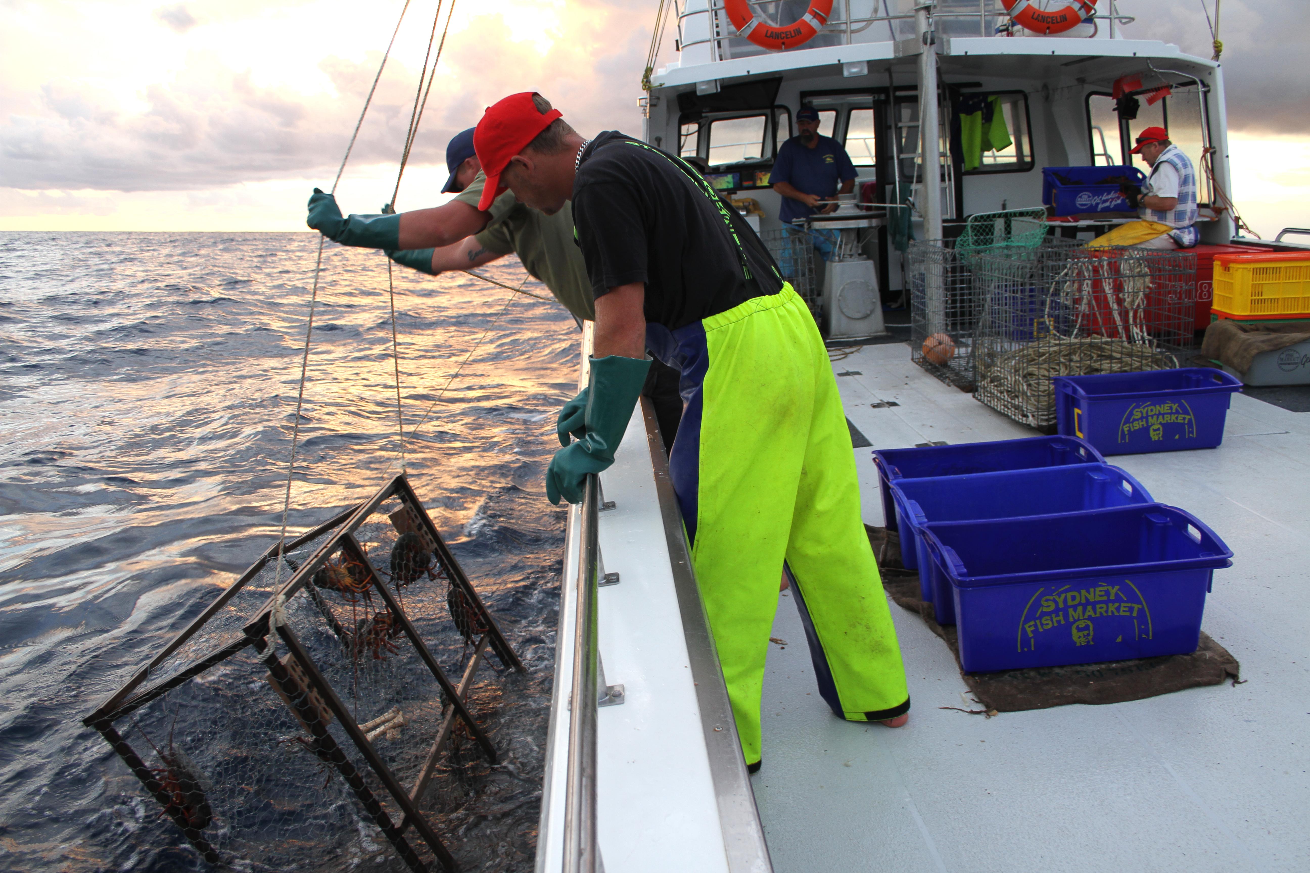 Seacoast Fishing Crabs