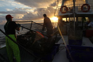 Seacoast Fishing Galley