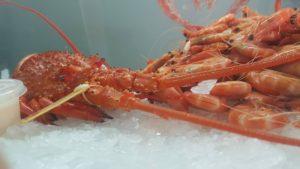 Seacoast fishing Lobster