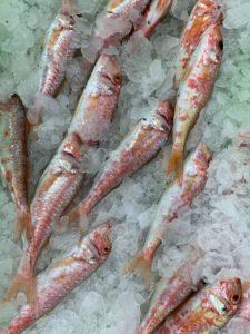 Fresh Fish Seacoast